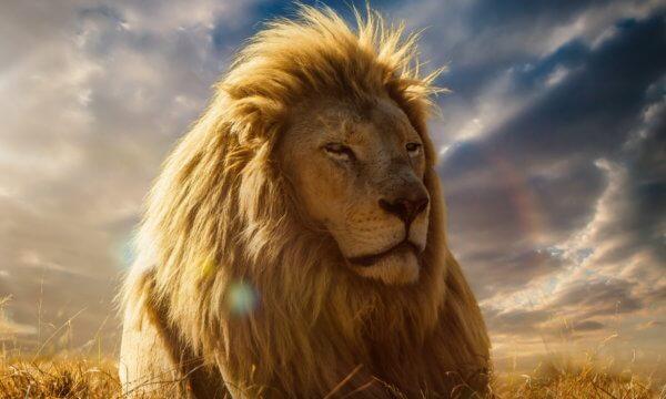 Lion_ture-self-confidence